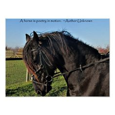 Off to Canada ...sold a poster today!!!!!!Black Friesian Horse famous horse quote poster