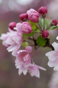 Blossom 7 - sooc