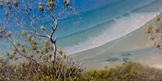 Mark Waller's Beachscapes - The Complete Picture acrylic painting workshop held at the Sunshine Coast in July 2014 will show you how to frame your beachscapes to create even more depth and realism with natural bushland and grasses.