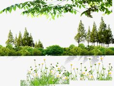 Trees and bushes, Green Trees, Flowers, Underbrush PNG and PSD