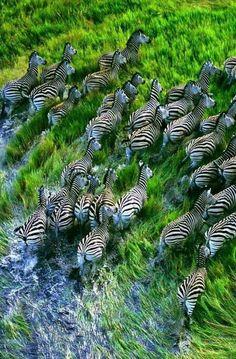 Wildlife ... Africa .. - Mohamed Hamada - Google+