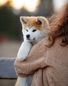 Japanese Dog Breeds, Japanese Dogs, Cute Dogs, Cute Babies, Akita Dog, Best Friends Forever, Shiba Inu, Cute Baby Animals, Dog Cat
