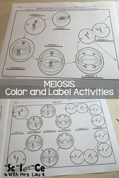 How I Teach Mitosis and Meiosis in High School Biology is part of Science Images High Schools - Science With Mrs Lau has superfun ideas and resources to help her high school students learn about mitosis and meiosis Learn more about her ideas here Biology Classroom, Biology Teacher, Science Biology, Science Education, Life Science, Biology Experiments, Science Labs, Ap Biology, Forensic Science