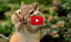 Wait for the Moonwalk | Animal videos dubbed w/British accents