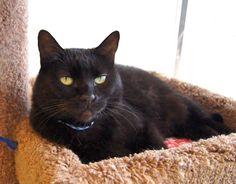 Buffy sitting in the sun!  #black #cat