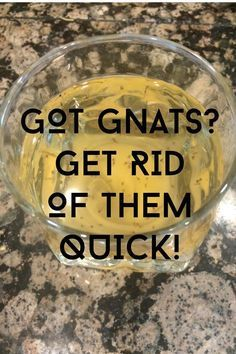 Get rid of gnats fast with this quick DIY bait recipe!