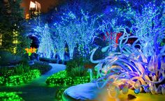 Atlanta Botanical Garden all done up for the holidays! Host your Holiday Party at the Gardens and experience the amazing Garden Lights, Holiday Nights exhibit.