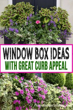These Charleston window boxes use beautiful shade and sun plants to add great curb appeal to the front yard garden. Get inspiration from their window box ideas to design gorgeous flower box plant combinations for your own home. Window Box Plants, Window Box Flowers, Shade Flowers, Window Boxes, Shade Plants, Flower Boxes, Window Ideas, Blue Flowers, Gardening For Beginners