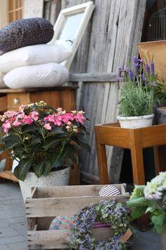sk & Cat In The Closet Ladder Decor, Cat, Plants, Closet, Inspiration, Home Decor, Atelier, Biblical Inspiration, Armoire
