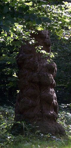 The Lion Tree by swiftymags Trees And Shrubs, Trees To Plant, Pretty Gif, Tree People, Magical Tree, Spooky Trees, Giant Tree, Beauty Around The World, Unique Trees
