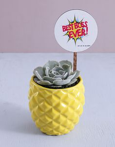 Best Boss Ever Succulent In Pineapple Pot Gifts For Boss, Gifts For Him, Boss Day Messages, Incredible Gifts, Amazing, Best Boss Ever, Happy Boss's Day, Gift Delivery, Bosses Day Gifts