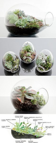 CANNOT WAIT to move out of my apartment that gets no sunlight so I can make some terrariums. I think they add such a great vibe!