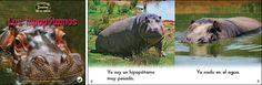 Los hipopotamos—by Claire Vial & Graham Meadows Series: Zoozoo en la Selva GR Level: C Genre: Spanish, Informational