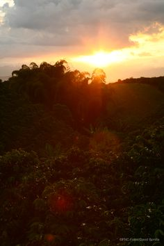 Atardecer en la zona cafetera / Sunset in coffee region. Coffee Love, Celestial, Sunset, Places, Outdoor, Art, Coffee Area, Paths, Colombia