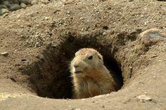 Groundhog Day: Did Punxsutawney Phil See HisShadow?