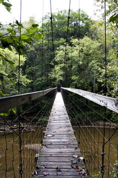 Sheltowee bridge / Red River Gorge / Kentucky, USA - I'll pass on walking across this bridge...bridge, right?