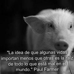 Palabras de Paul Farmer: #ViveVegano