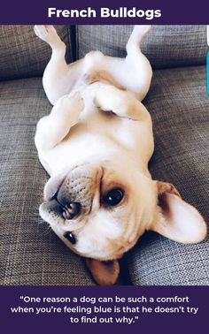 14 Best Puppies images in 2019 | Cute puppies, Fluffy