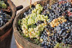 Rookie Home Winemaking Mistakes