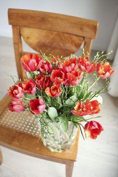 https://flic.kr/p/SdZeL4 | rote Tulpen auf einem Stuhl
