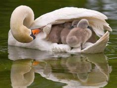 Beautiful shots of baby animals with their moms and dads