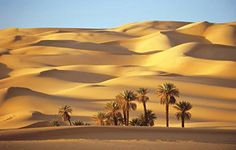 GlobAllShare™ World Society Fun Deserts, Desert Dream, Desert Oasis, Exotic, Beautiful Places, Scenery, Africa, Australia, Sunset