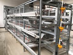 H Type Automatic Broiler Chicken Cage System Supplier - Poultry Equipment Manufacturers 丨WZH