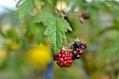 Beautiful Garden, Vackert Trädgård: I #Malmö #trakter hösten har inte kommit än!