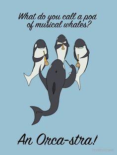 An orca-stra.....