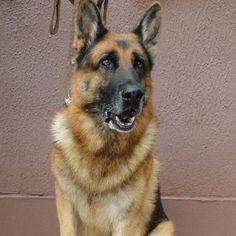Aposentados, cães da Guarda Municipal do Rio são colocados para adoção via Facebook