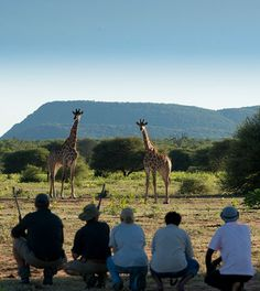 Best trails & walking holidays in South Africa as well as walking safaris in Africa in Zambia, South Africa, Zimbabwe & Botswana by Cedarberg Africa Mount Kilimanjaro, Walking Holiday, Table Mountain, African Safari, Yoga Retreat, Lodges, South Africa, Trail, Camps