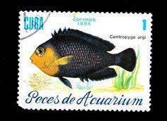 Cherubfish, or Pygmy angelfish (Centropyge argi), stamp printed by Cuba,1985