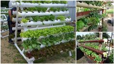 What a great idea to grow plants. The hydroponic garden town made with PVC pipes has excellent flow system, so that you grow lots of different plants, such as onions, spinach, chive etc. You can place them on A Balcony, Walkway, Or Wall.   You may also like: 25 Fun & Creative Uses of PVC …