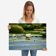 White water lily detailed, premium quality, magnet mounted prints on metal designed by talented artists. Poster Prints, Lily, Metal, Water, Beautiful, Gripe Water, Orchids, Metals, Lilies