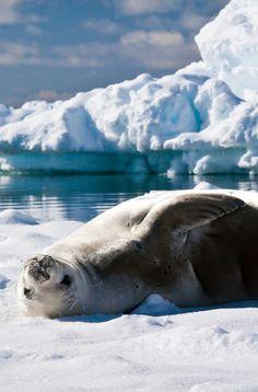 Wildlife experiences on Antarctica are incredible!