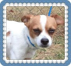 Act quickly to adopt FISHER. Pets at this Shelter may be held for only a short time.Marietta, GA - Chihuahua Mix. Meet FISHER a Dog for Adoption.