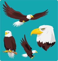 Bald Eagle in four different situations like, Flying Eagle, Perching Eagle, Landing and Eagle Head vector cartoon collection. Fly Drawing, Drawing Poses, Eagle Face, Bald Eagle, Eagle Head, Free Vector Graphics, Free Vector Art, Cartoon Drawings, Cartoon Art
