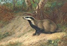 Watercolors of mammals by Archibald Thorburn (Scottish, 1860–1935).