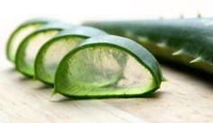 Aloe-Vera-Plant-Sliced-Aloe-Vera-for-Hair-Loss-e1438624722471-1024x594-724x420