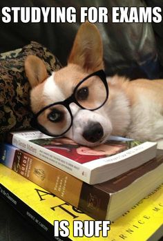 Finals don't have to be stressful. Look at this dog!