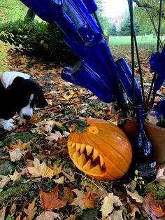 Pumpkin Pictures, Pumpkin Ideas, Pumpkin Carving, Halloween Decorations, Art, Art Background, Kunst, Pumpkin Carvings, Performing Arts