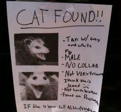 Cat Found.... sort of