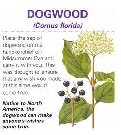 Healing Herbs, Medicinal Plants, Natural Healing, Herbal Remedies, Home Remedies, Natural Remedies, Vintage Diy, Natural Medicine, Herbal Medicine