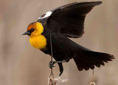 Best of Birdshare, June 2013 Featured Photographer