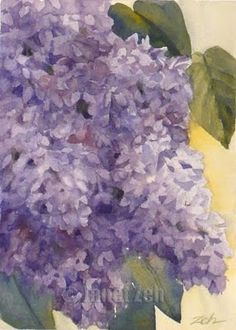 watercolor lilacs by Janet Zeh