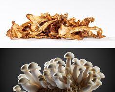 Pilze aus der Lausitz