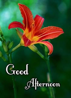 Good Afternoon My Love, Good Afternoon Quotes, Good Morning Beautiful Quotes, Sunny Afternoon, Good Morning Flowers, Good Morning Images, Good Morning Quotes, Good Morning Hindi Messages, Good Evening Greetings