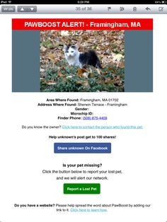 Lost Cat: Framingham, MA Lost & Found, Cats, Gatos, Cat, Kitty, Kitty Cats