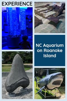 Experience the NC Aquarium on Roanoke Island [Article + Video]: If you love the Outer Banks and learning about marine life, take a short drive to Manteo and experience the North Carolina Aquarium on Roanoke Island for yourself! Outer Banks Nc, Outer Banks Vacation, Roanoke Island, Stuff To Do, Things To Do, Marine Life, Seaside, Vacations