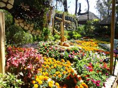 So my parents suddenly wanted to go to Baguio city for the Panagbenga or flower festival. Baguio City, Flower Festival, To Go, Flowers, Plants, Plant, Royal Icing Flowers, Flower, Florals
